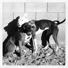 Pegram and Rose Dog Training, Rose, Animals, Instagram, Pink, Animales, Animaux, Roses, Animal