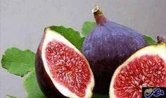 التين فوائد صحية عديدة: التين هو احد الفواكه التي أقسم الله بها في القران . وقد ورد ذكرها مرة واحدة مقرونه بالزيتون . قال تعالى : ( والتين…