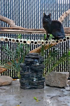Rustic Catio, cat enclosure, cat run, catio! Love the climbing bridge idea! Diy Cat Enclosure, Outdoor Cat Enclosure, Cat Run, Cat Walk, Statues, Cat Garden, Outdoor Cats, Cat Photography, Cat Life