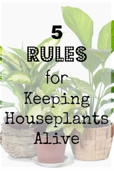 5 Rules For Keeping Houseplants Alive