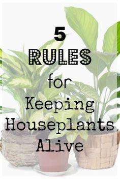 5 Rules For Keeping Houseplants Alive | Gardening garden news, housepl aliv