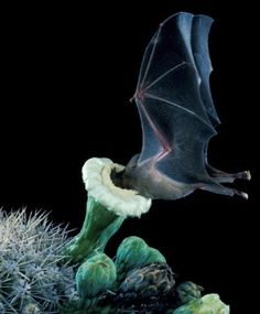 Guest Post: Bananas for Bats - Barbara K. Richardson