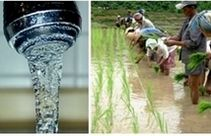 Image of a tap and a rice paddy linked to Sites2See: Water education