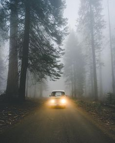 Foggy trip