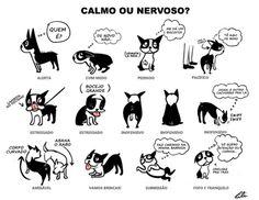 cachorro-calmo-ou-nervoso