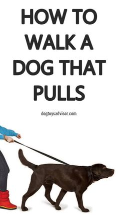 Has walking your dog turned into a constant game of tug-o-war? Find out how to train your dog to stop pulling on the leash so you can enjoy more relaxing walks with your pup. How to Stop Your Dog Pulling on the Leash Service Dog Training, Dog Training Books, Agility Training For Dogs, Basic Dog Training, Dog Training Classes, Dog Training Videos, Service Dogs, Dog Agility, Training Academy