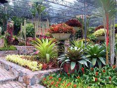 Incredible bromeliad displays at Nong Nooch Tropical Botanical Garden in Pattaya, Thailand.