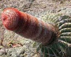 Weird and Totally Bizarre: Nature's Naughty Displays Very Funny Photos, Funny Images, Bing Images, Funny Pics, Funny Stuff, Funny Quotes, Weird Plants, Exotic Plants, Unusual Plants