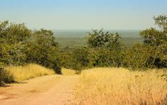 A roundup of the best places in the Kruger National Park to park, sit, watch and enjoy a beautiful view. Kruger National Park, National Parks, Game Reserve, South Africa, The Good Place, Landscapes, Wildlife, Rest, Country Roads