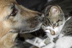 Best Friends by Ron Ot on 500px