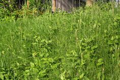 By Nikki Phipps (Author of The Bulb-o-licious Garden) While weeds can be a menace and an eyesore as they creep throughout our lawns and gardens, they can also provide important clues to the quality of your soil. Many lawn weeds indicate soil conditions, making it easier for homeowners to manage their soil quality and any…