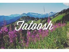 A hike to Tatoosh, an old fire lookout site where Martha Hardy spent a summer as lookout // Alpine Lily