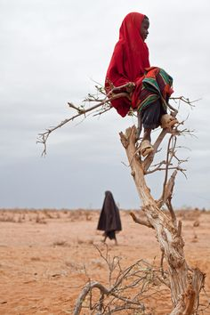 A Somali refugee girl sits perched on a tree in Ifo camp