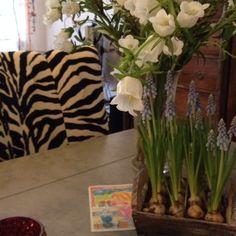 Spring inside my home - News - Bubblews