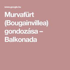 Murvafürt (Bougainvillea) gondozása – Balkonada Bougainvillea