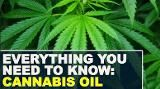 Everything you need to know: Cannabis oil