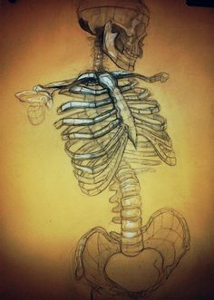 Analytic drawing of human skeleton  -scientificillustration tumblr