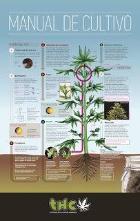 Todo lo que necesitas saber para empezar tu cultivo está en este poster. | tío Cogollos