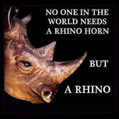 I love traditional Chinese medicine, but the demand for rhino horn in part because of its supposedly magical properties is leading to the extinction of the rhinoceros, which would be an enormous tragedy. Individual consumers have to take responsibility for their actions & refrain from buying anything derived from rhinos~!