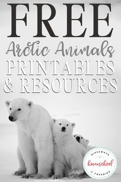 FREE Arctic Animals Printables and Resources - Homeschool Giveaways - Are you studying and learning about the arctic this year? Study more about the animals that live in - Bear Facts For Kids, Polar Bear Facts, Polar Bears, Animal Activities, Science Activities, Arctic Habitat, Artic Animals, Winter Activities For Kids, Lessons For Kids