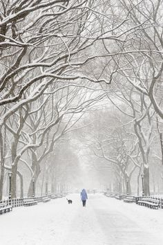 Snow in Albany, New York