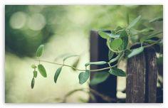 In The Garden Ultra HD Desktop Background Wallpaper for UHD TV : Widescreen & UltraWide Desktop & Laptop : Multi Display, Dual Monitor : Tablet : Smartphone 4k Uhd, Hd Wallpaper, Wallpapers, Hd Desktop, Bee, Backgrounds, Herbs, Gardening, Display