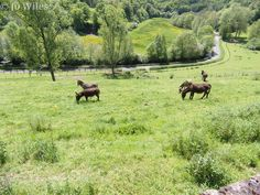 Beautiful Limousin countryside, Haute-Vienne