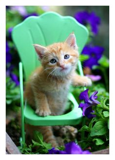 Who doesn't like a ginger kitty I ask??