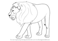 draw lion drawing animals step zoo drawings animal learn lions drawingtutorials101 easy pencil tutorials getdrawings