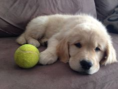I'll just rest here by my ball till I'm ready to play again!