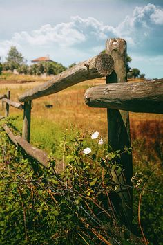 Wooden Fence In Countryside