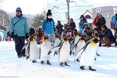 Penguins at Asahiyama Zoo in Japan