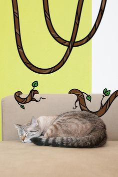 It's a jungle in here. At least for your cat. That's why every piece of new home furniture is simply another thing to climb on. Learn about our new Indoor Complete Recipe, which is made with a real Superfood Blend for the needs of indoor cats.