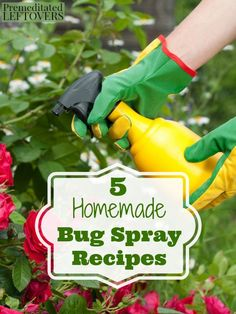 5 Homemade Bug Spray Recipes- Don't let bugs destroy your garden! These frugal DIY sprays will eliminate pests for a fraction of the cost of store-bought products. Bug Spray For Plants, Garden Bug Spray, Garden Bugs, Garden Insects, Garden Pests, Veg Garden, Vegetable Gardening, Garden Fertilizers, Rusty Garden