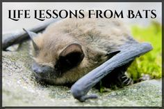 What Bats Can Teach Us About Being Human