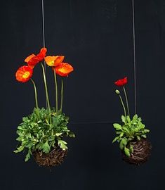 "Floral centro colgado del techo en boda plantas simple fun DIY Hanging Floral Centerpieces //  need these ""potted"" poppies for my house!"