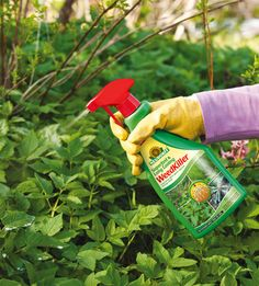 Compare and Choose the top weed killer in the united kingdom by visiting http://weedicide.co.uk/