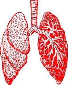 Essential oils for bronchitis - Asthma Treatment Home Remedies For Bronchitis, Asthma Remedies, Asthma Symptoms, Acute Bronchitis, Holistic Remedies, Natural Remedies, Essential Oil For Bronchitis, Essential Oils, Human Body