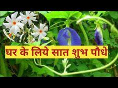 7 पौधो के नाम जो घर के लिये है शुभ Lucky plants.....#OrganicGardenIndoorToolFertilizer - YouTube Orchid Plants, Orchids, Camphor Uses, Lucky Plant, Puri Recipes, Love Shayri, Cotton Plant, Vedic Mantras, Vastu Shastra
