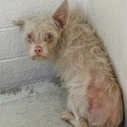 Shelter terrier hiding in corner pleading for help with her eyes: Terrified