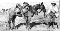 New Zealand War Horse