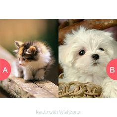 kittens or puppy's Click here to vote @ http://getwishboneapp.com/share/2061713