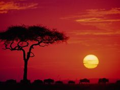 5. Go to Africa and go on safari. -DONE.  I completed this when I went to Kenya in 2009 with my DePaul University nursing class. It was 2 weeks of amazing experiences. The Masai Mara is something that everyone should see at least once.