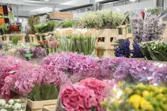 Masses of colourful hydrangea at the brand new, New Covent Garden Market, April Love Flowers, My Flower, New Covent Garden Market, Hydrangea Colors, Flower Market, New Chapter, Marketing, Instagram Posts, Plants