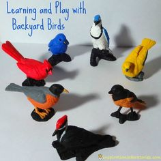 Learning and Play with Backyard Birds from @Safari Ltd ® and a Giveaway!