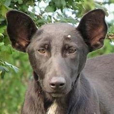 Many Internet commenters are agreeing that this Ukrainian dog from central Kiev is a dead-ringer for Russian President Vladimir Putin.