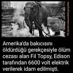 #Fil #Amerika #America #Edison #Elektrik #Meclis #Miletvekili #TBMM #İsmetİnönü #Atatürk #Cumhuriyet #ZaferBayramı #receptayyiperdogan #Cami#türkiye#istanbul#ankara #izmir#kayıboyu#Kul #laiklik#asker #cumhurbaşkanı#sondakika #mhp#antalya#polis #jöh #pöh#dirilişertuğrul#tsk #Kitap#Tarikat#Sol #OdaTv #chp#KurtuluşSavaşı #şiir #tarih #bayrak #vatan #devlet #islam #din #gündem #türk #ata #Pakistan #Adalet #turan #kemalist #solcu #Azerbaycan #Öğretmen #Kanun #Musul #Kerkük #Belge