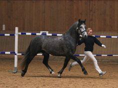 Verband der Ponyzüchter Oberbayern e.V. - Kurzberichte 2015 Teil 2