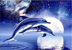 5D DIY Diamond Painting Dolphin