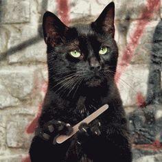 Sabes que eres un gif - Cuando eres un gato inmóvil, excepto sus garras y un archivo en qué archivo de sus garras. Y lo hace en frente de una pared de ladrillo etiquetado con rojo y negro. En bucle.